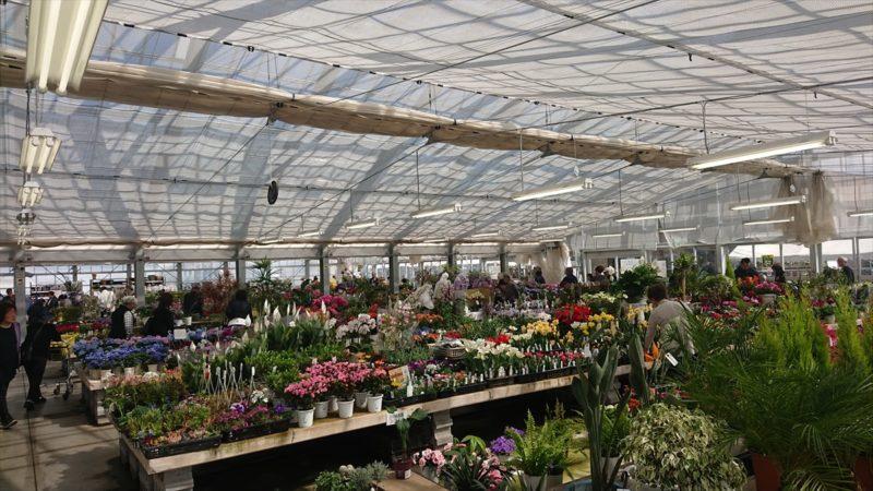 温室の中には花がたくさん