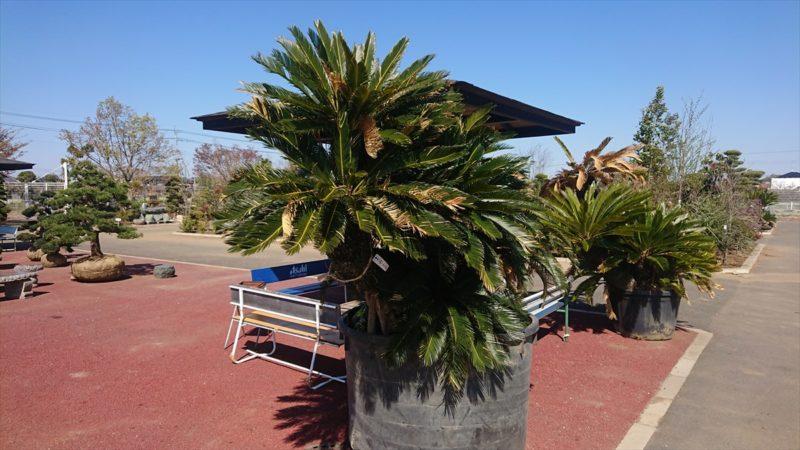 豊富な種類の植物