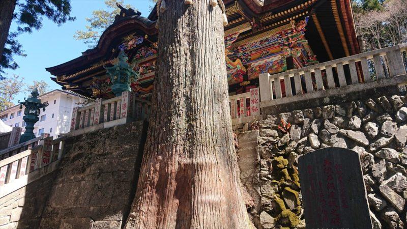 拝殿の左右にそびえ立つご神木