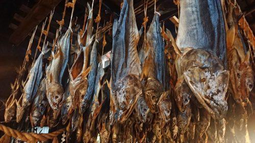 村上市【きっかわ】で大量にぶら下がる塩引鮭の見学