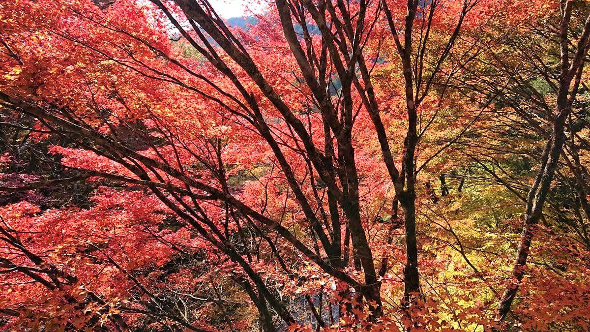 栃木の紅葉の穴場!大芦渓谷の見頃と駐車場情報