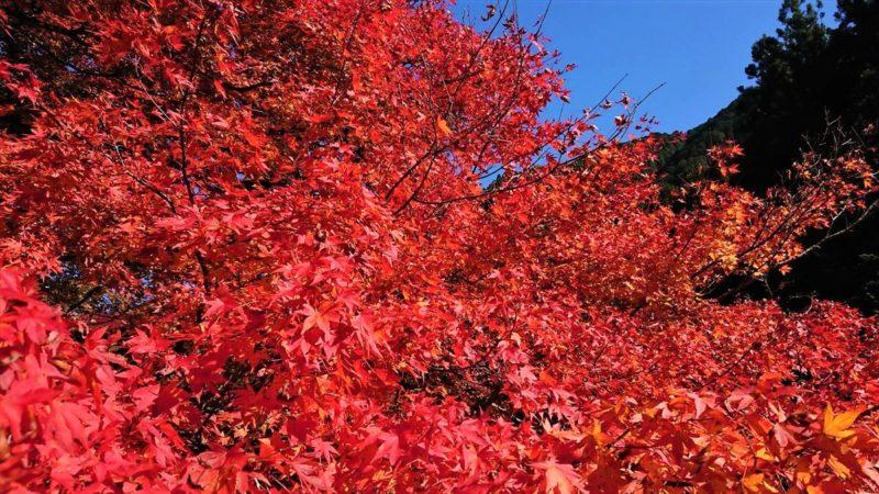 栃木の大芦渓谷は穴場の紅葉スポット