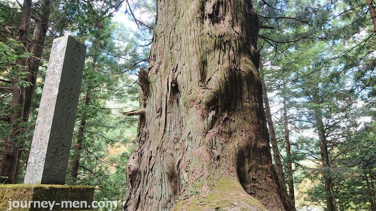 山梨の巨木!湯島の大杉は一見の価値あるパワースポット